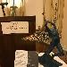 Un'opera di Dalì per l'asta del cardinale Sepe, l'Angelo del trionfo è il dono più significativo Giornata della Cultura e della Diplomazia: Matera e Plovdiv due capitali europee a Napoli