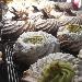 Nuvolette - - - Fotografia inserita il giorno 20-01-2018 alle ore 21:44:54 da vincenzoliuzzi