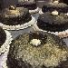 Torta rocher fondente - - - Fotografia inserita il giorno 20-01-2018 alle ore 08:13:55 da vincenzoliuzzi