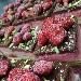 Tortino farcito con gelato di fragoline di Marsala pistacchio di bronte e bisquit al cioccolato