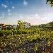 Il 27 gennaio al Cellaio del Real Bosco di Capodimonte chiusura del 2° Festival delle Vigne metropolitane di Napoli con degustazioni e workshop su vigne storiche e agricoltura nei siti reali