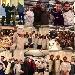 - - - - Fotografia inserita il giorno 18-01-2018 alle ore 19:03:28 da luigi