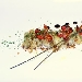 Ricetta inserita su spaghettitaliani.com da Nicola Russo: Rane arraganate